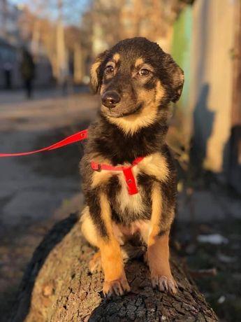 Мальчик Кекс щенок 4 месяца