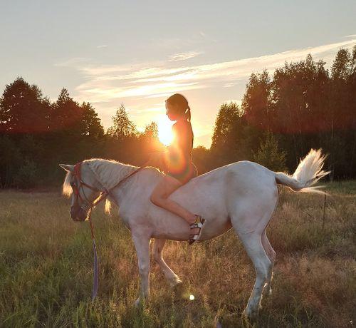 Аренда лошади для фотосессиии, конных прогулок