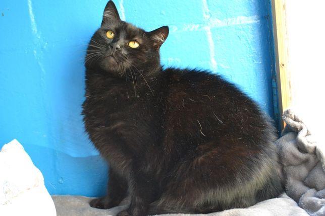 чорна яскрава кішка 2 роки