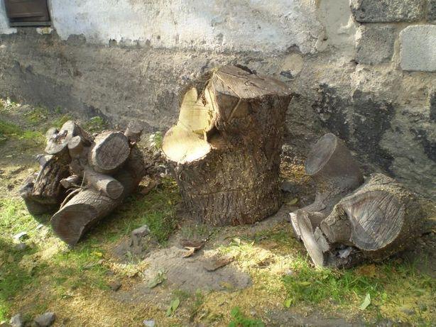 Крупные чурки шелковицы, дрова, спил 2016 года
