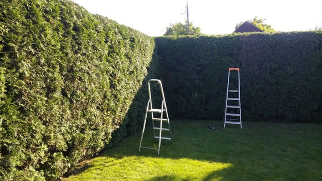 Jesienne Prace Ogrodowe i Wycinka Drzew