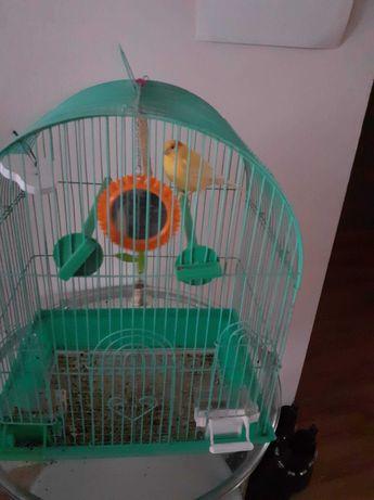 Ptaszek kanarek wraz z klatka