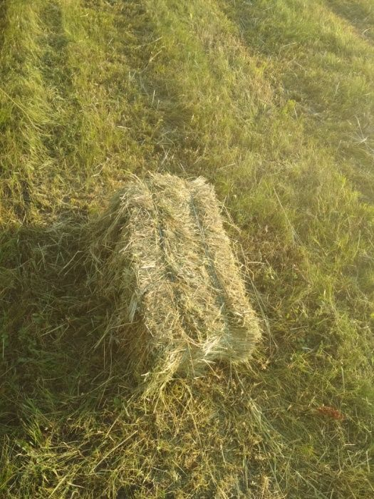 Продам сено в тюках. Купянск - изображение 1
