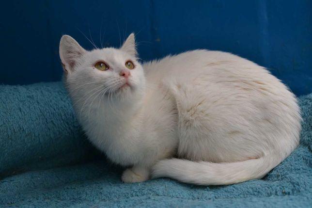 блондиночка кішечка 5м в пошуках домівки