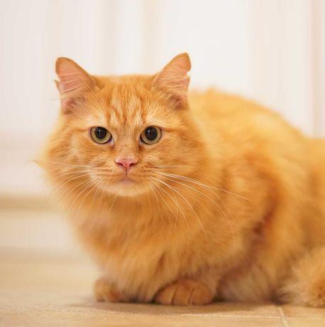шикарний котокрасунчик котичок 1р