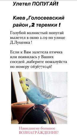 Волнистый попугай ,улетел, пропал.