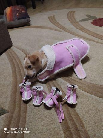 Одяг для собачки