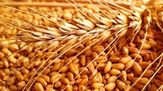 Продам зерно пшеницы!