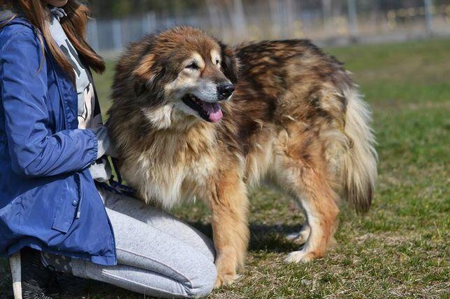 Berta - spokojna staruszka, która dogaduje się z innymi psami
