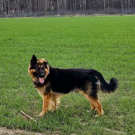 Pies Reproduktor