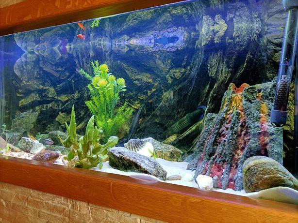 Akwarium z całym wyposażeniem i dodatkami