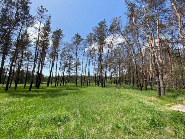 Участок Песчанка в сосновом лесу с выходом к реке
