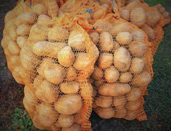 Młode Ziemniaki Denar Cebula Zimowa