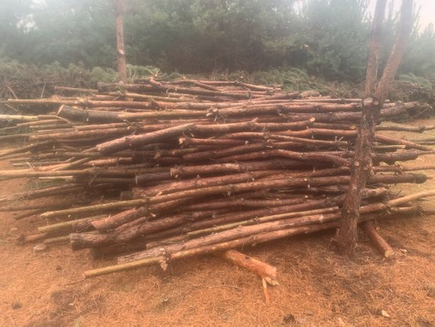 Oddam za darmo: drewno, gałęzie, biomasa