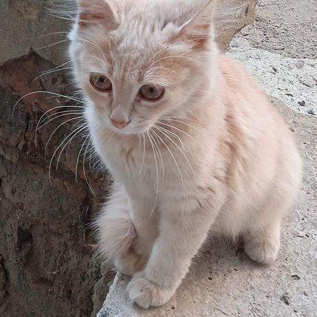 Красивейшая кошечка котёнок