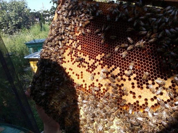 Мёд майский разнотравье лесной полевой цветочный подсолнуховый