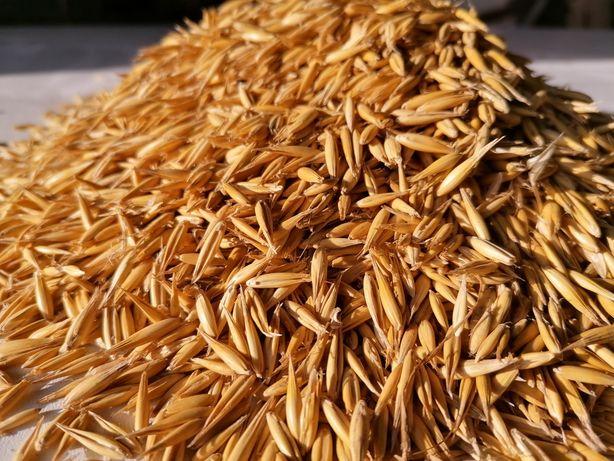 Owies, pszenica, jęczmień, kukurydza, ziemniaki Dostawa pod dom gratis