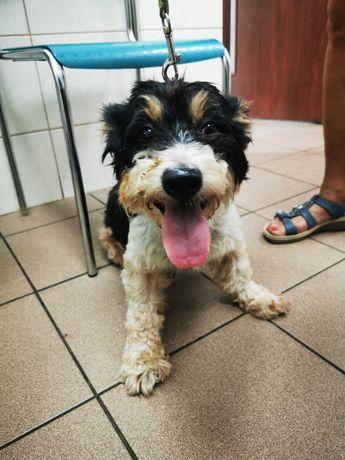 Znaleziono psa Poznań