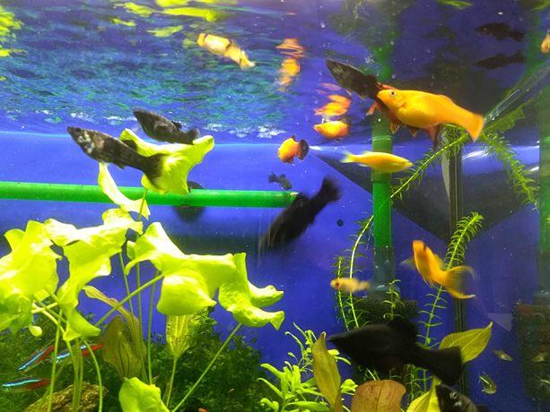 Rybki akwariowe różne