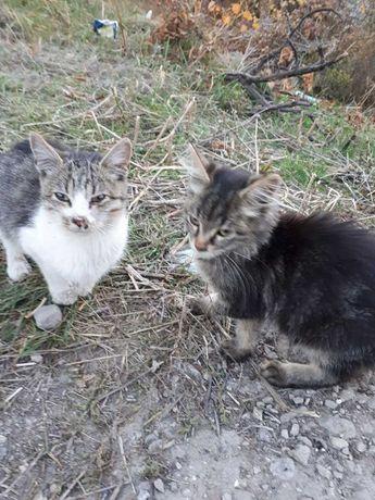 помогаю найти дом бездомным котятам (мальчики)