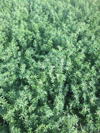 Корм для животных люцерна сено солома в тюках урожай 2021