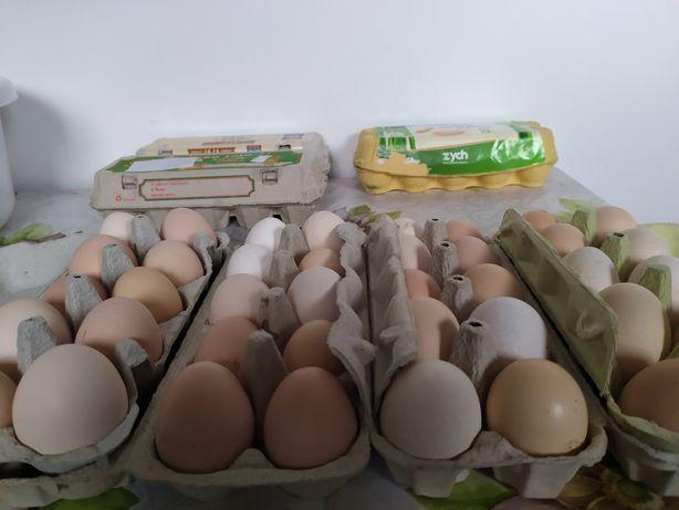 Jaja wiejskie z wolnego chowu