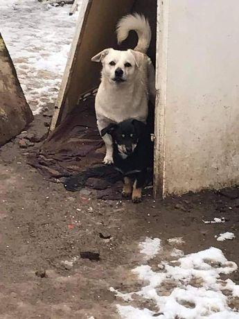 Piesek Szuka Domku tymczasowego