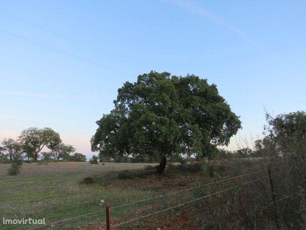 Terreno zona de Serpa com 9,5 hectares