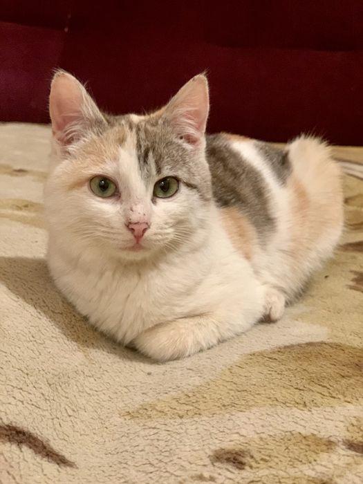 Котенок Лиза в добрые руки. Сумы - изображение 1