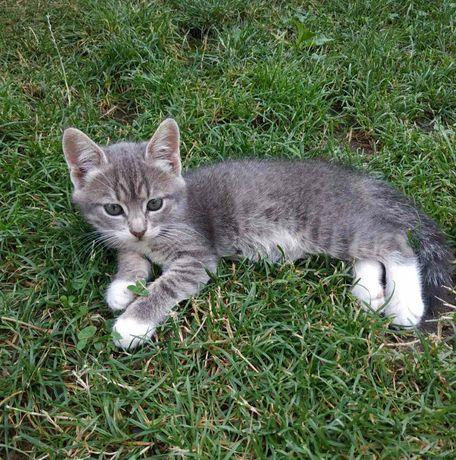 Девочка 2 месяца в добрые руки, котёнок, котята, кошка, кот, котик