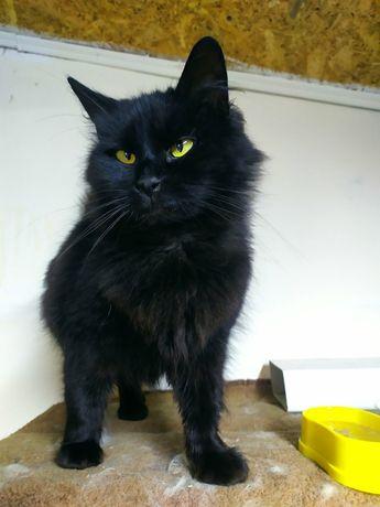 Кошка с забавной мордашкой и раскосыми глазками ищет свой дом!