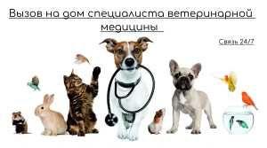 Ветеринаринарные услуги на дому: вет: врач на дом