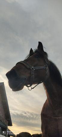 Udostępnianie klacze do jazdy konnej