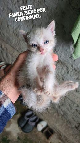 Feliz- gatinha bebê para adoção