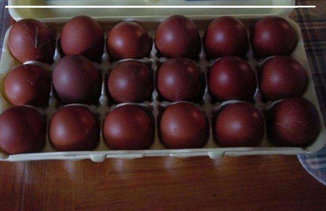 Ovos de galinha cor chocolate (raça maran)