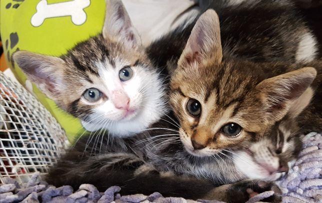 Gatinhos para adoção ,