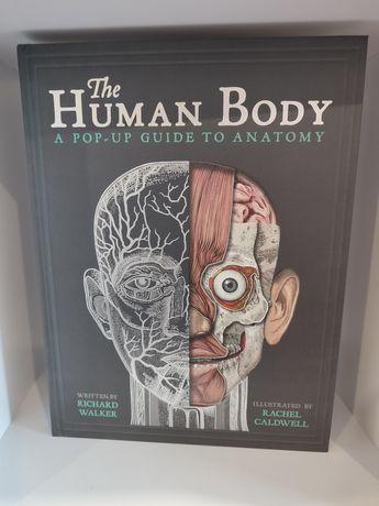Книга панорама Human Body Тело человека 3Д