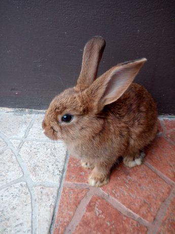 Małe króliczki do domu
