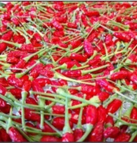 Malaguetas jindungo, sementes