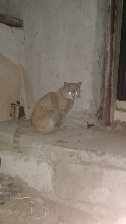 Рыжий кот.Может кто ищет своё чудо?