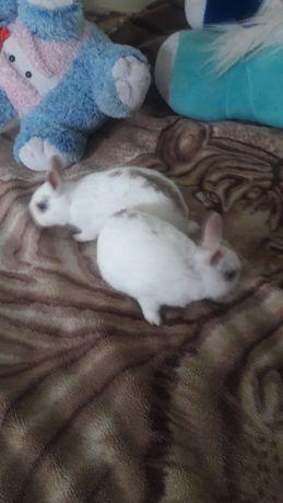 Декоративні кролики . Продаю недорого .