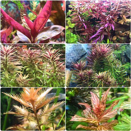 Большой выбор Аквариумных растений , набор Грунт Хелена Креветки Рыбки