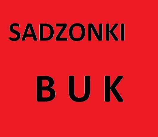 Sadzonki Buku BUK drzewka CZERNIKOWO 70gr szt
