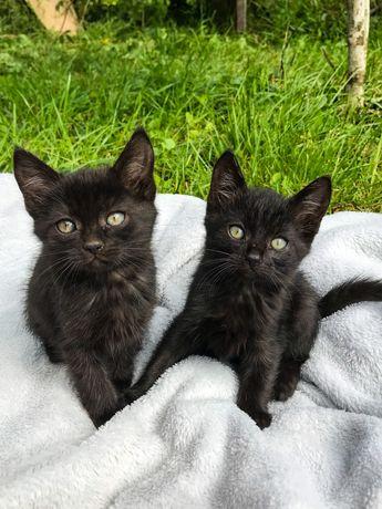 Отдам котят-малышей в хорошие и добрые руки!