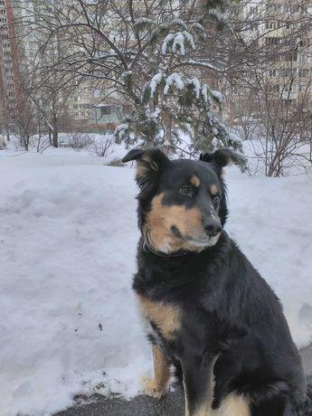 Пропала собака Дина!