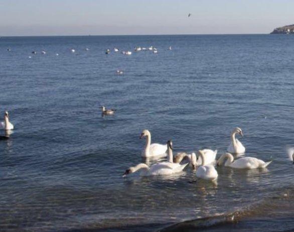 Обмен:Феодосия,новая 2ком,ремонт,море 5мин-КиевОдессаБердянскТрускавец
