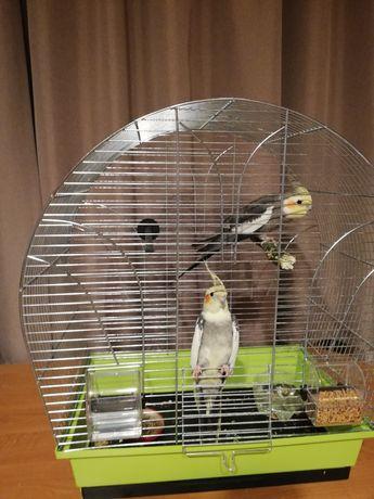 Sprzedam klatkę dla papug.
