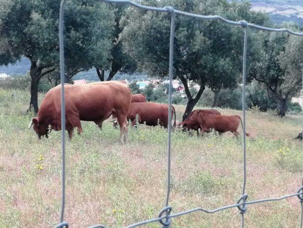 Vendo carne de bovino, suíno, caprino, ovino, galinha, coelho, pato