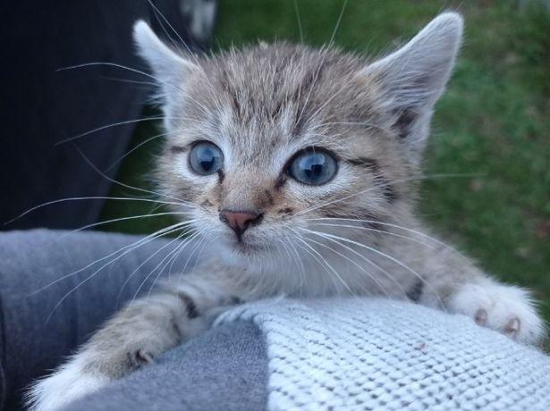 Oddam 4 małe kotki