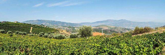 Terreno de vinha e construção (com benefício) - Valdigem Lamego